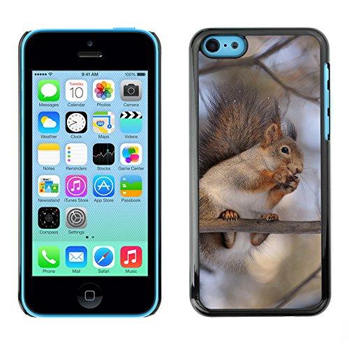 Premio Sottile Slim Cassa Custodia Case Cover Shell // F00015250 oiseau // Apple iPhone 5C
