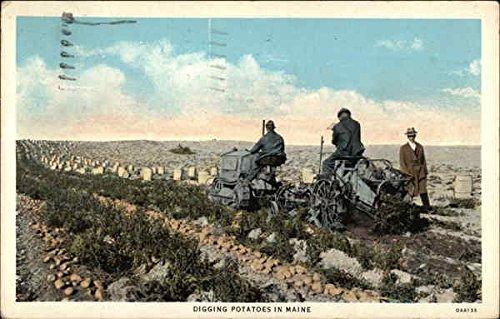 Digging Potatoes - Digging Potatoes in Maine Farming Original Vintage Postcard