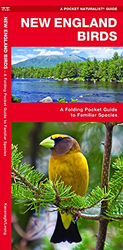 New England Birds: A Folding Pocket Guide to Familiar Species (A Pocket Naturalist Guide) (Pocket Star Ri)