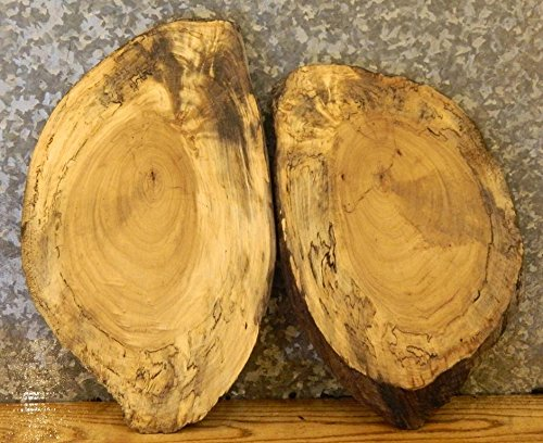 2- Spalted Maple Natural Edge Oval Cut Centerpiece Wood Slabs T: 13/16'', W: 13 1/2'', L: 21 3/4'' - 6118-6119 by The Lumber Shack