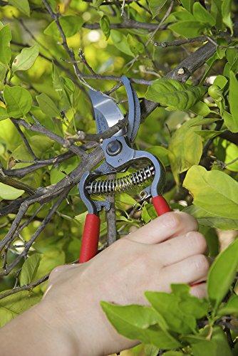 Corona BP 3180D ClassicCUT Forged Bypass Pruner, 1-Inch Cut