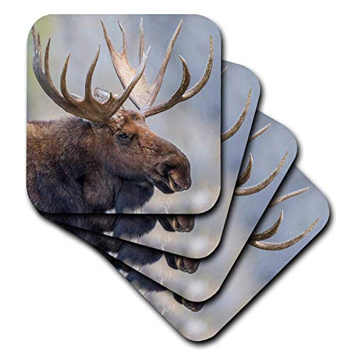 3dRose Danita Delimont - Moose - USA, Wyoming, Grand Teton National Park, bull moose portrait. - set of 8 Coasters - Soft (cst_315222_2) ()