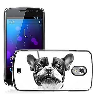 Hot Style Cell Phone PC Hard Case Cover // M00130344 Dog French Bulldog Bulldog Pet // Samsung Galaxy Nexus GT-i9250 i9250