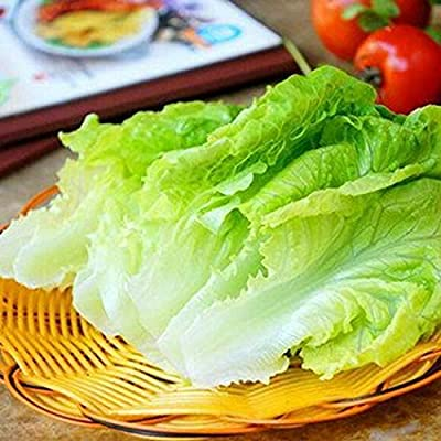 MelysUS Garden- Organic Buttercrunch Lettuce Seeds Bok Choy Seeds Butter Head Lettuce Green Vegetable Seeds For Healthy: Home Improvement