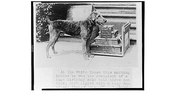 Amazon Photo White House Laddie Boy Recipient Birthday Cake American Flag Washington DC 1922 Photographs