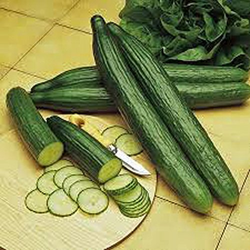 CUCUMBER, LONG GREEN IMPROVED, HEIRLOOM, ORGANIC 99+ SEEDS, GREAT FOR ANY VEGGIE PLATTER ()