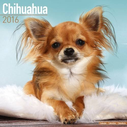 Chihuahua Calendar calendars Calendars Avonside product image