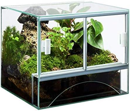 Rettili Planet Liane Naturale per terrario rettili Premium Vine sambawa S Lunghezza 60/ /3/cm /80/cm Diametro 2/