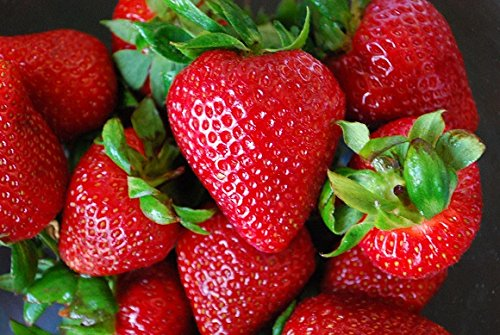 Organic Rustic Strawberry Seeds - 105 Count