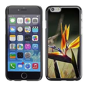 LASTONE PHONE CASE / Carcasa Funda Prima Delgada SLIM Casa Carcasa Funda Case Bandera Cover Armor Shell para Apple Iphone 6 Plus 5.5 / cvetok travinki makro