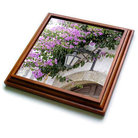 3dRose Danita Delimont - Flowers - Arched doorway with Purple Bougainvillea and lantern. Portugal. - 8x8 Trivet with 6x6 ceramic tile (trv_313810_1)