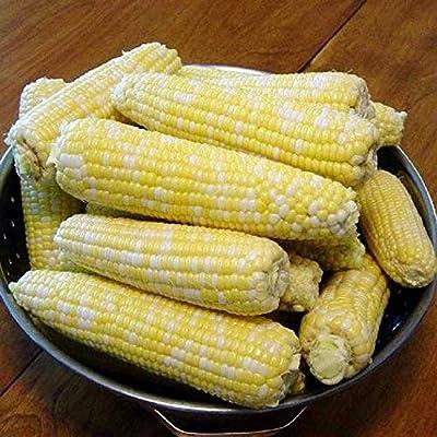 David's Garden Seeds Corn Sugar Enhanced Ambrosia SL5682 (Multi) 100 Non-GMO, Hybrid Seeds : Garden & Outdoor