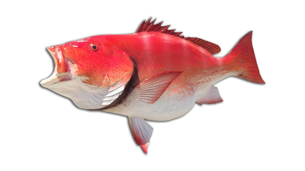 39'' Red Snapper Half Sided Fish Mount Replica, Affordable Coastal Decor - Indoors Or Outside.