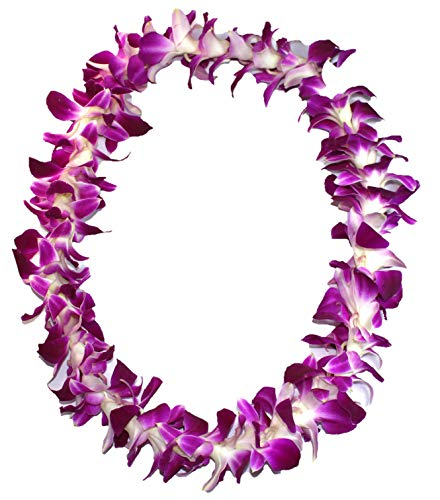 Leis Fresh Orchid Hawaiian - Aloha Island Lei Fresh Hawaiian Orchid Flower Lei, Single Strand