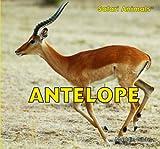 Antelope (Safari Animals)