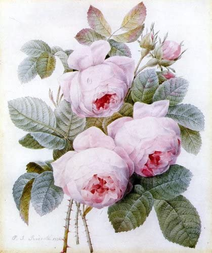 Teebecher  Redouté Rose  Jardin du roi  Kaffeebecher Knochenporzellan Joséphine