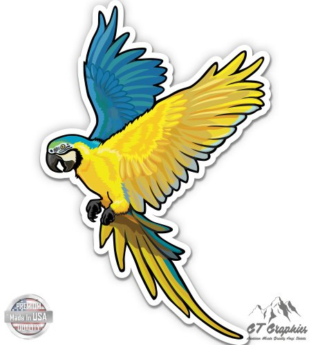 Hyacynth Macaw - 12