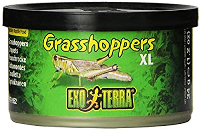 Exo Terra Reptiles Canned Food, Grasshoppers, 1.2-Ounce