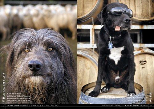Wine Dogs New Zealand: Craig McGill & Susan Elliott