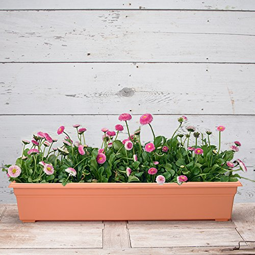 Countryside Flower Box Planter