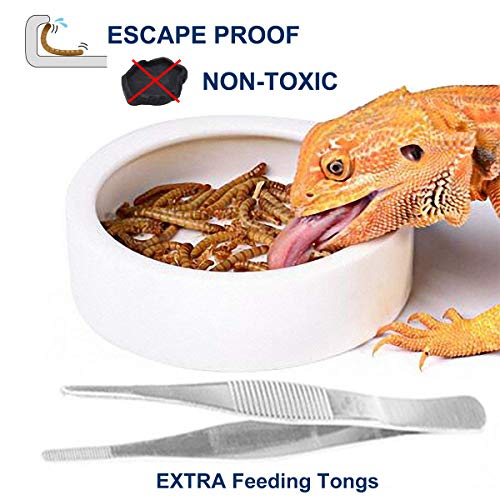 (SciEdu Worm Dish with Feeding Tweezers Tongs, Ceramic Reptile Dish Reptile Bowl Escape Proof Feeding Bowl-M)