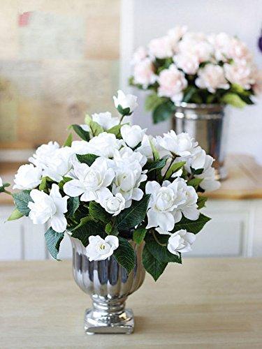 2pcs/bag Gardenia Bulbs (Cape Jasmine ) Bonsai Flower Bulbs Potted Plant  (not
