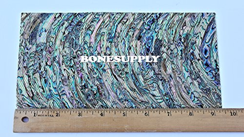 (Paua Heart Flexible Shell Coated Veneer Sheet (0.4 mm thick))