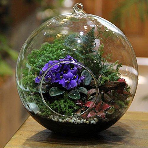 Vase suspendu en verre transparent boule pour plantes fleurs d coration de jardin maison - Boule decorative pour jardin ...