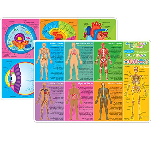 "Ashley Productions ASH95019 Smart Poly Learning Mat, Human Body & Anatomy, Polypropylene (PP)/Paper, 12"" x 17"""