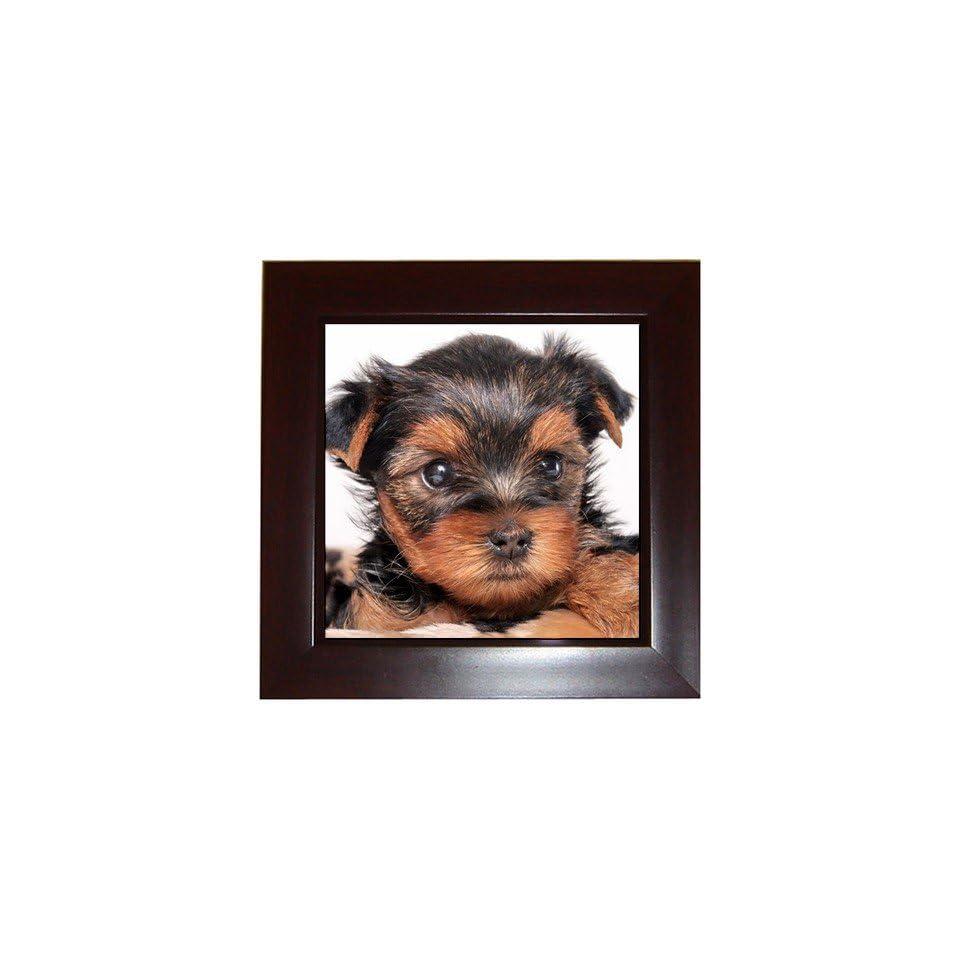 Yorkshire Terrier Puppy Dog 8 Framed Tile G0655