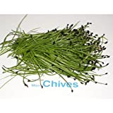 Micro Greens - Chives - 4 x 4 oz