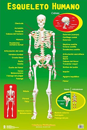 the-human-skeleton-esqueleto-humano-laminated-spanish-educational-poster-lamina-didactica-spanish-ve