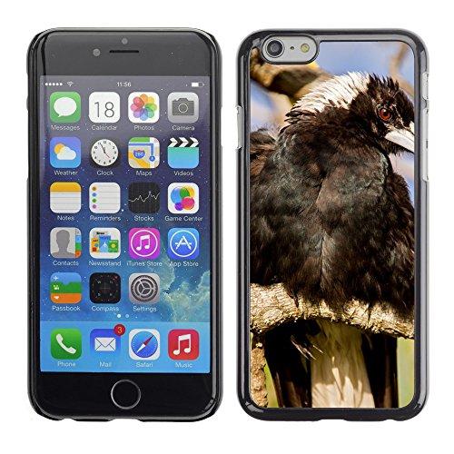 """Just Phone Cases Hard plastica indietro Case Custodie Cover pelle protettiva Per // M00127878 Australian Magpie Magpie Black Bird // Apple iPhone 6 PLUS 5.5"""""""