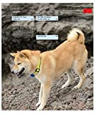 Shiba Inus (Complete Pet Owner's Manual)