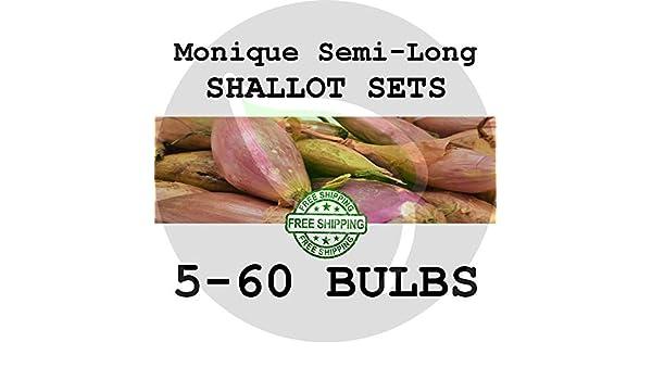 PLAT FIRM Semillas DE GERMINACION: 5 bulbos: Monique Shallot Bulb ...