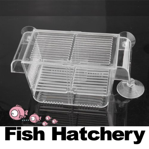 Aquarium fish tank clear plastic breeding fish spawn for Fish breeding tank