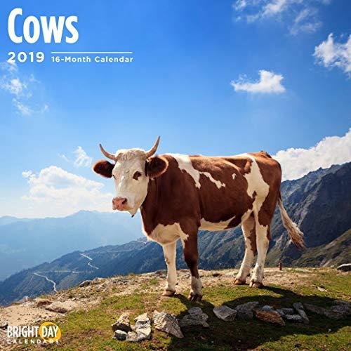 Cows 2019 16 Month Wall Calendar 12 x 12 -