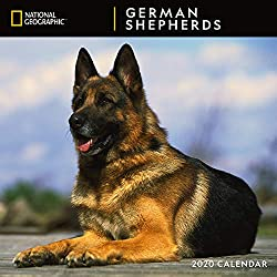 National Geographic German Shepherds 2020 Wall Calendar