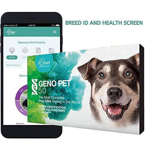 ORIVET Dog DNA Test | Comprehensive Dog Breed Test Kit, Genetic Testing, Health Risks and Life Plan GenoPet 5.0 for Canines