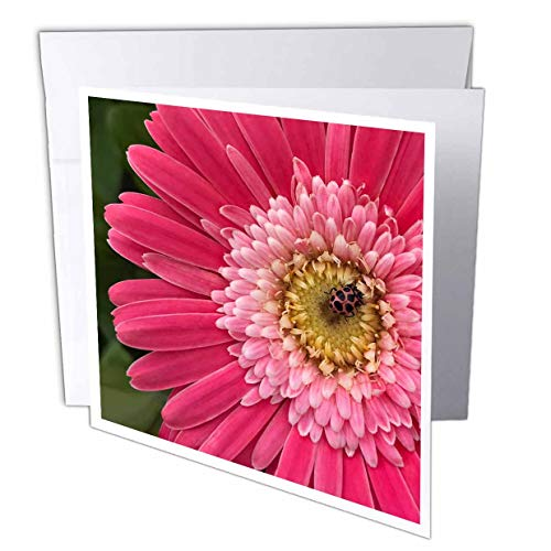 3dRose Stamp City - Nature - Photograph of a Pink Gerbera Daisy with a Pink Spotted Lady Beetle. - 1 Greeting Card with Envelope (gc_316751_5)