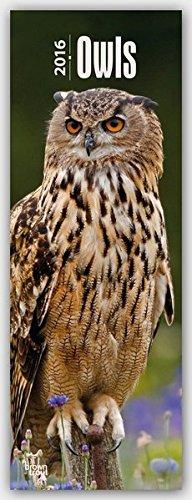 Owls 2016 - Eulen: Original BrownTrout-Kalender - Slimline [Mehrsprachig] [Kalender] (Slimline-Kalender)