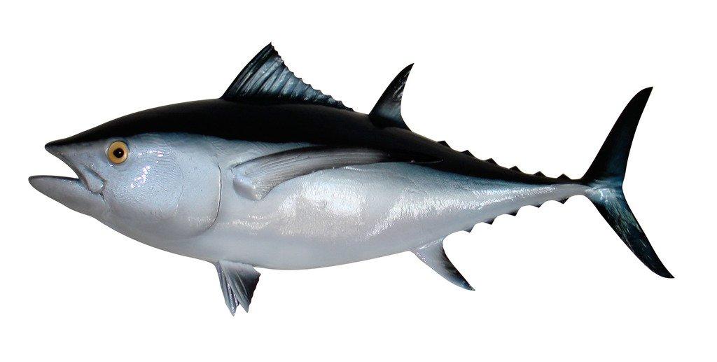 38'' Albacore Tuna Half Mount Fish Replica , Fishing Wall & Coastal Decor
