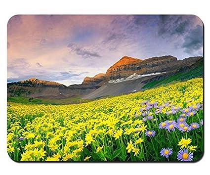 Amazon Com Beautiful Mountain Flowers Scenery Mouse Pad 8 6 X7