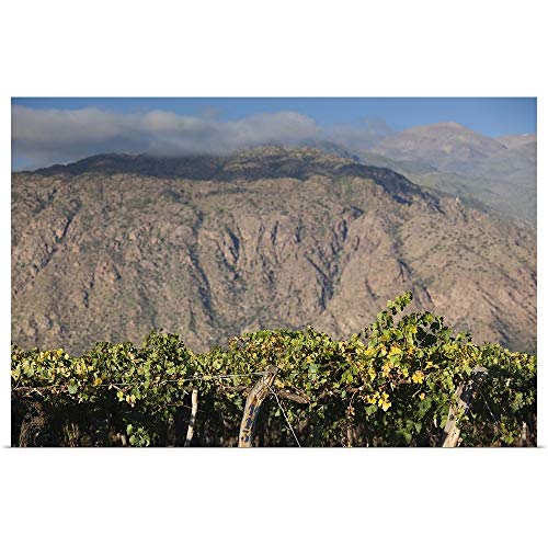 GREATBIGCANVAS Poster Print Entitled Crop in a Vineyard, Cafayate, Calchaqui Valleys, Salta Province, Argentina by 18