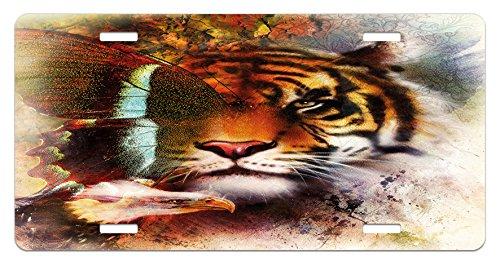 Bald Tiger - 7