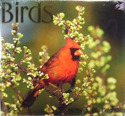 2010 12 x 11 Birds wall Calendar ()