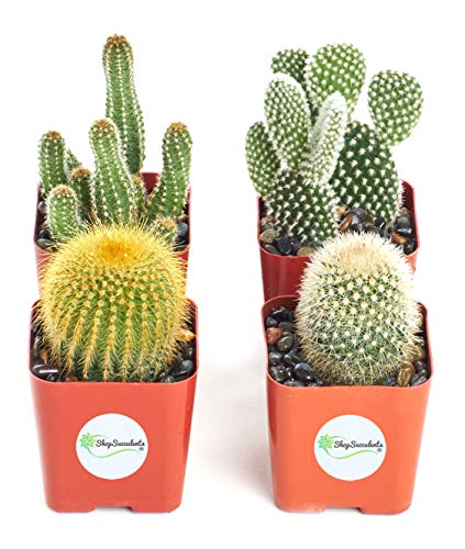 Shop Succulents | Cool Cactus Collection of Live Succulent Plants, Hand Selected Variety Pack of Cacti | Collection of 4
