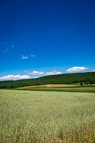 wheat-fields-and-the-appalachian-mountains
