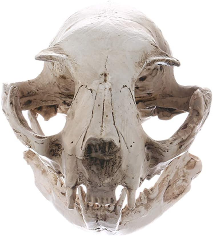 Amosfun Animales de Halloween Complementos de esqueleto de miedo Resina Gato Modelo de cr/áneo Estatuilla Acuario Tanque de peces Paisaje Decoraciones