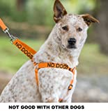 """NO DOGS"" Orange Color Coded Non-pull Dog Harness (Not Good with Other Dogs) PREVENTS Accidents By Warning Others of Your Dog in Advance!, My Pet Supplies"